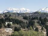 ブナの芽吹きと三山の眺望